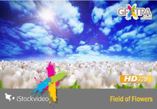 iStockVideo - Field of Flowers HD720