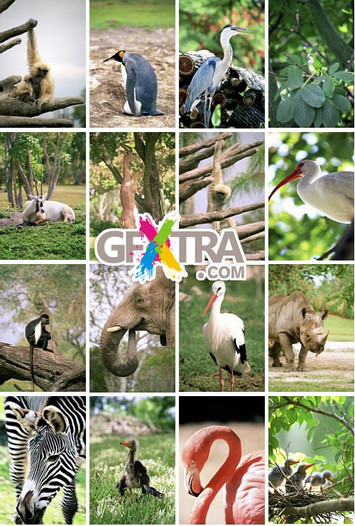Medio Images WT39 Discover Animals of The World
