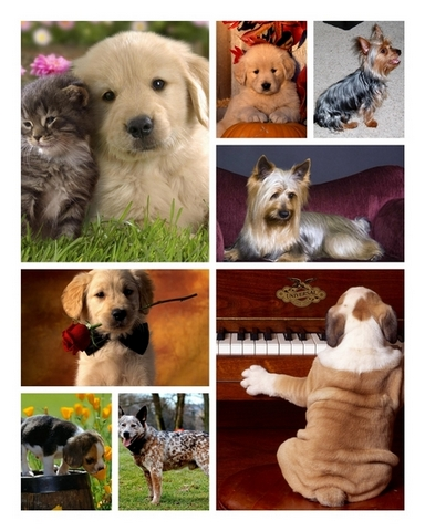Funny dogs wallpaper collection