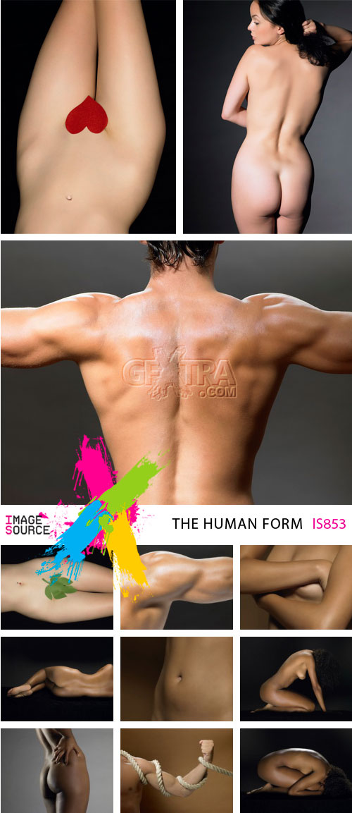 Image Source IS853 The Human Form