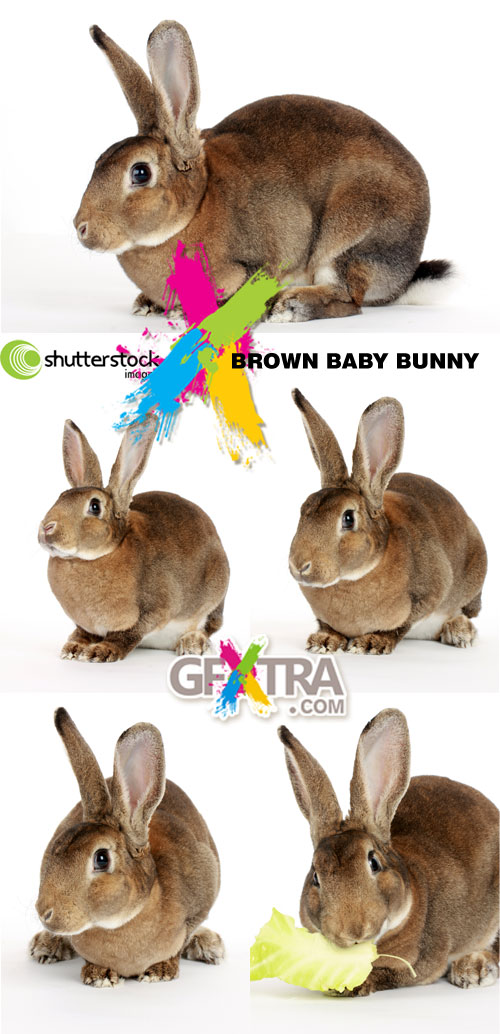 Brown Baby Bunny 5xJPGs - Shutterstock