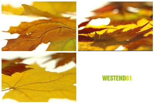 WestEnd61 Vol.017 Autumn Leaves