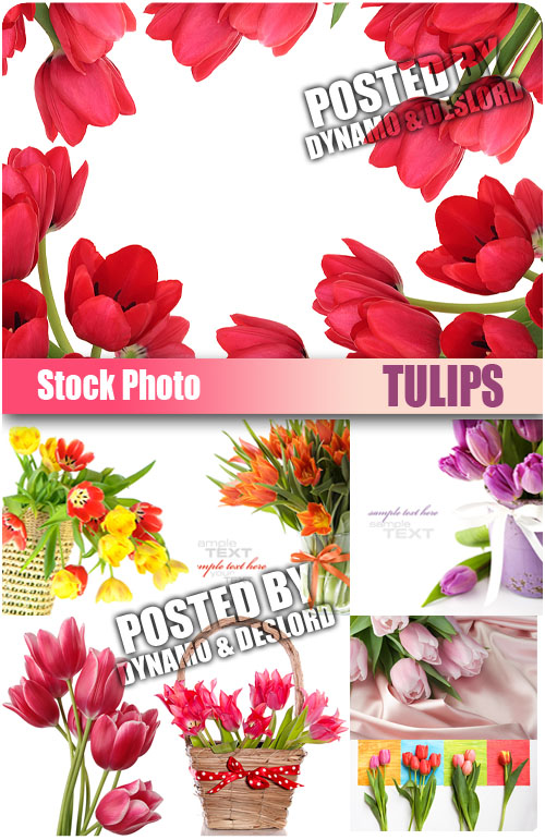 UHQ Stock Photo - Tulips