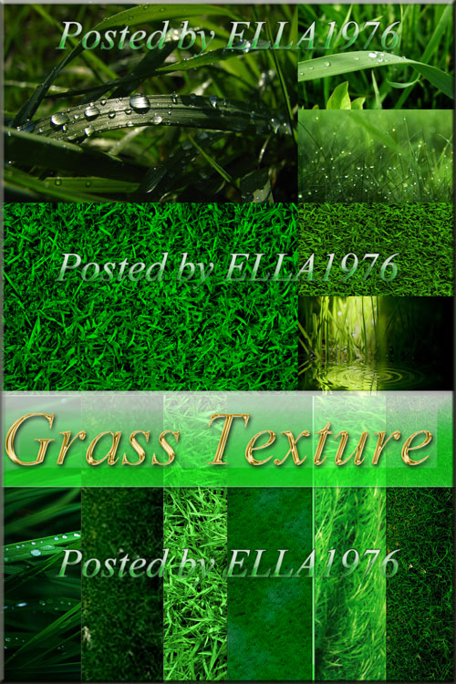 Beautiful grassy texture