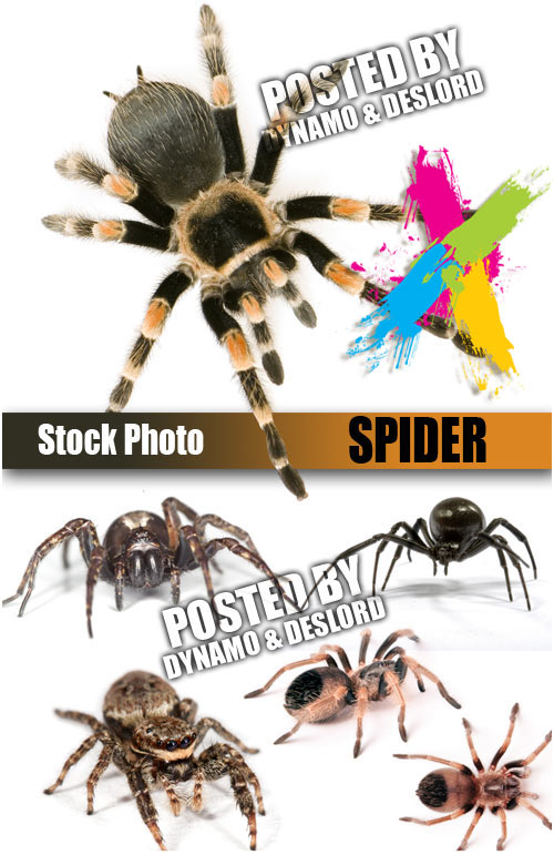 Spider - UHQ Stock Photo