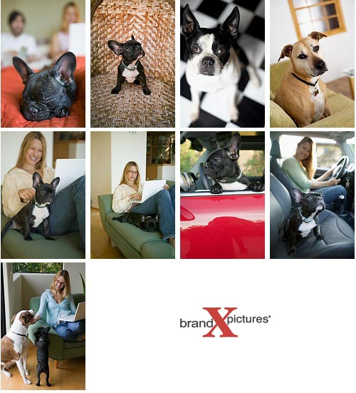 Brand-X X349 Pets and Pet Lovers