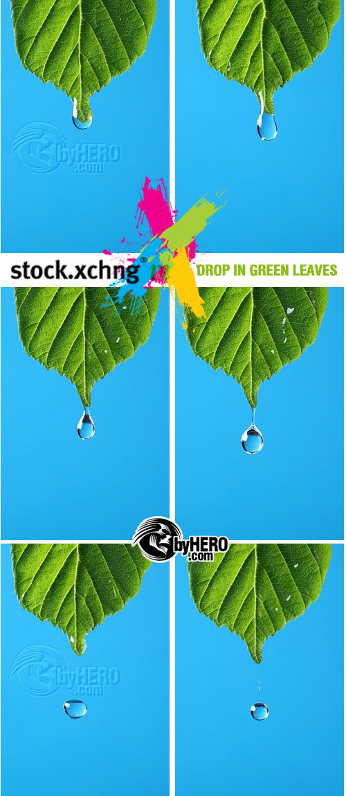 Drop in Green Leaves 10xJPGs - StockXchng