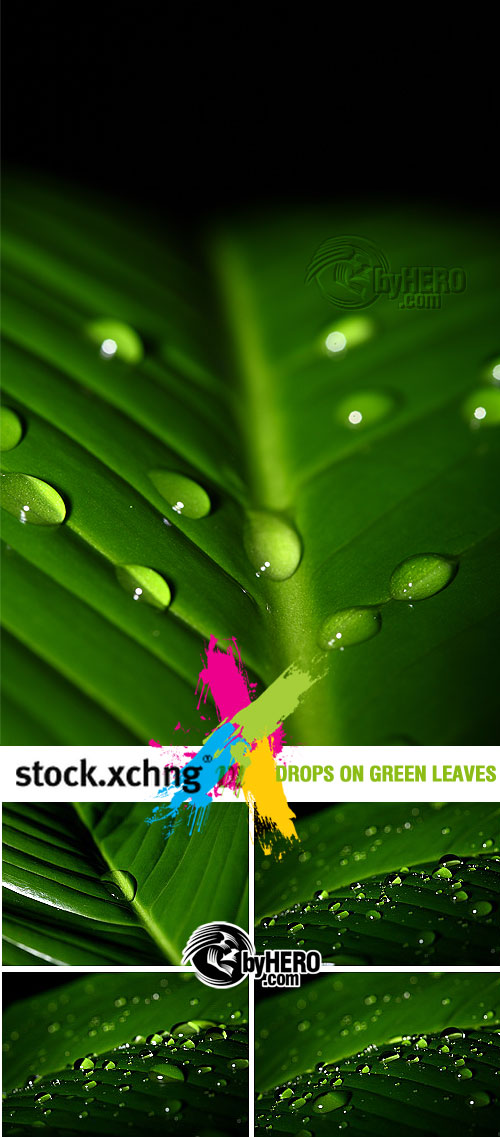 Drops on Green Leaves 5xJPGs - StockXchng