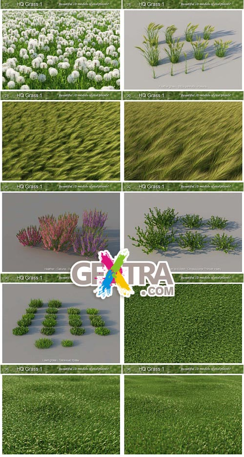 Mentor Plants HQ Grass for c4D VRay