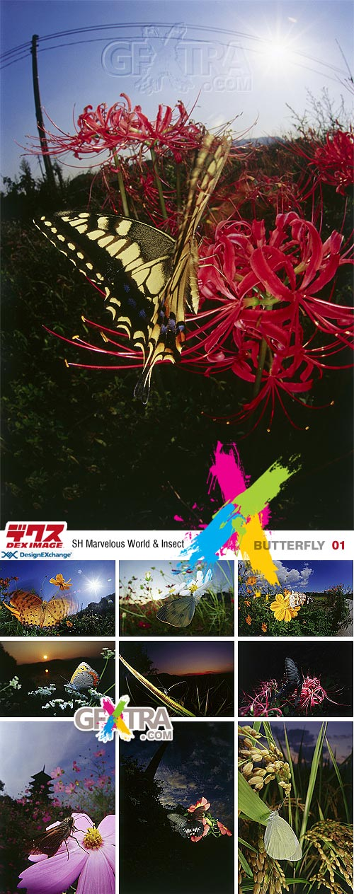DEX Images 01: Butterfly - SH Marvelous World & Insect