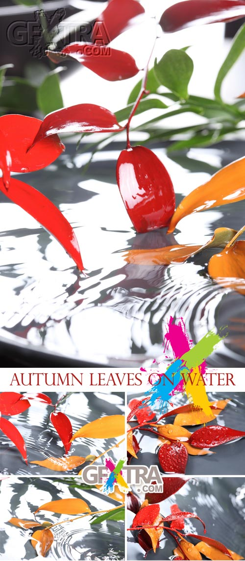 Stock Images - Autumn Leaves on Water 5xJPGs