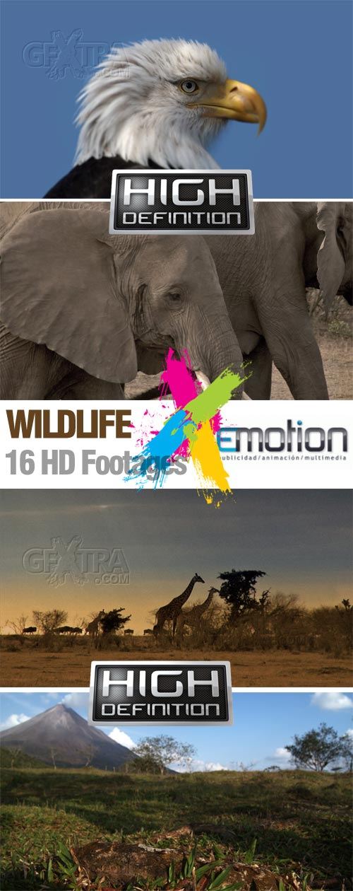 Wildlife - 16 HD Footages