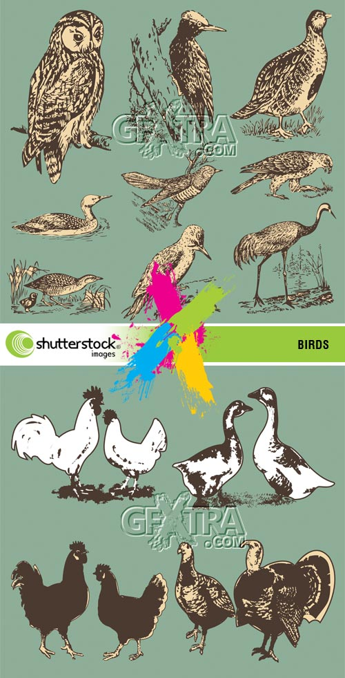 Stock Vector - Birds