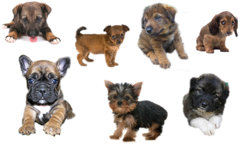 Little Dogs psd