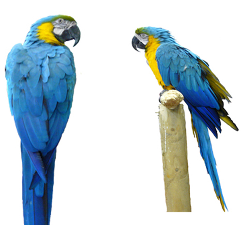 Sources - Colorful large parrot