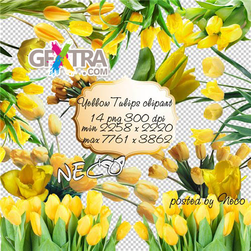 Yellow Tulips clipart PNG