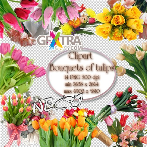 Clipart Bouquets of tulips PNG