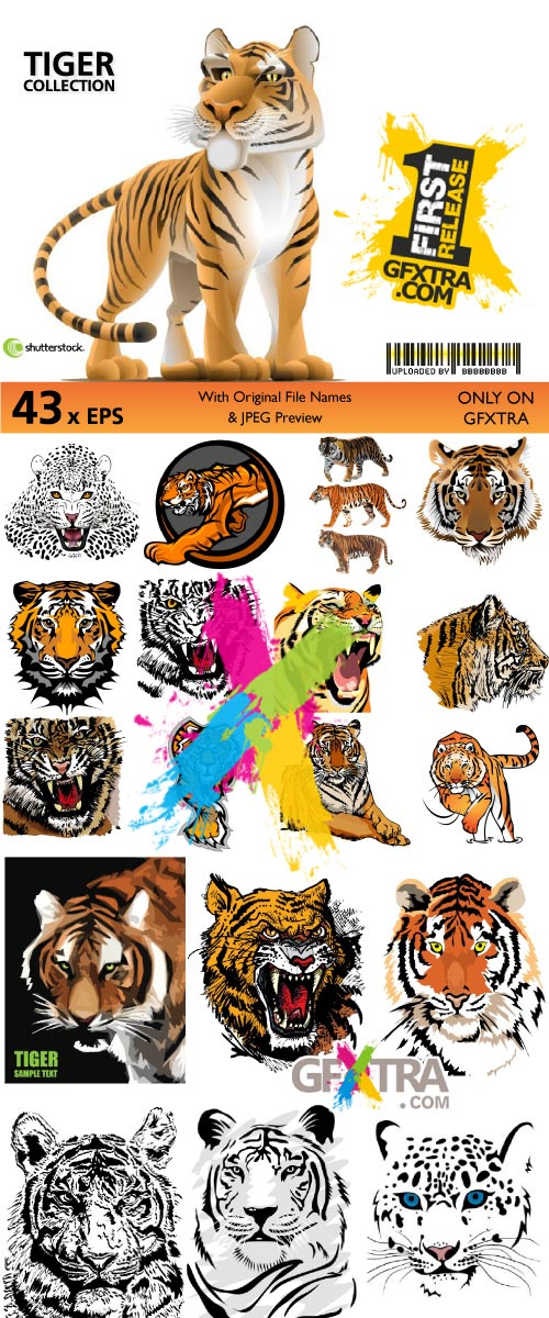 Amazing Tiger Collection | 43xEPS From Shutterstock
