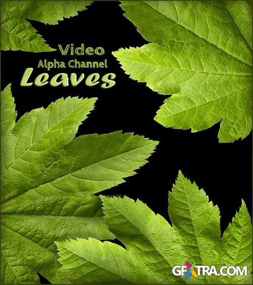 Alpha Channel Footage - Green Leaves - Creative Video Footage
