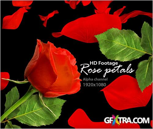 Alpha Channel Footage HD - Rose Petals (Red Color) - Creative Video Footage
