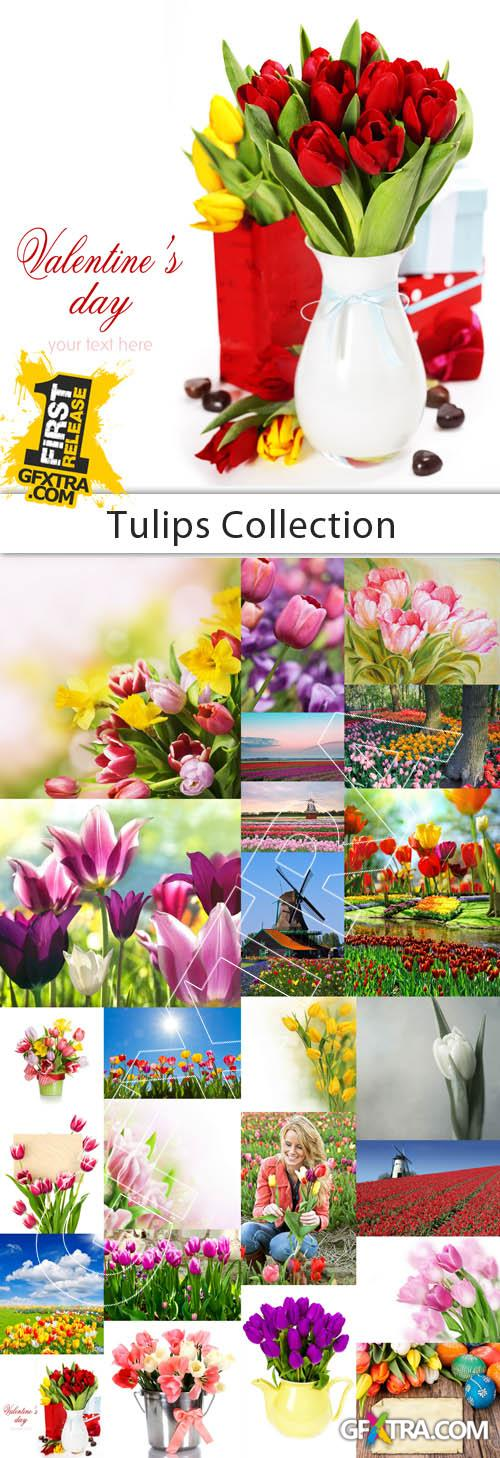 Tulips Collection - 25 HQ Stock Images
