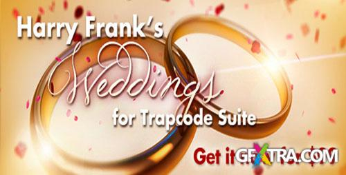Red Giant Guru Presets: Harry Frank\'s Weddings For Trapcode Suite - After Effects projects