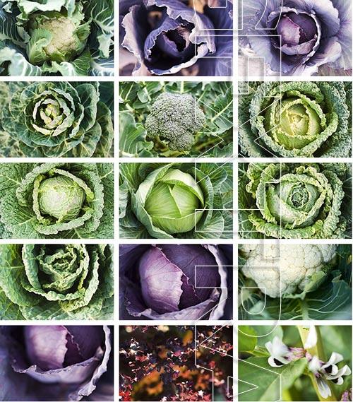 PhotoAlto ZenShui YA091 Green and Organic