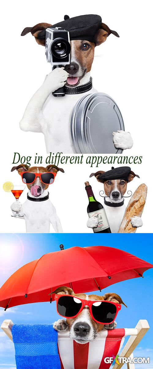 Stock Photo: Dog with different subjects