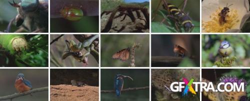 DigitalVision Video - A Little Wild 2xCD