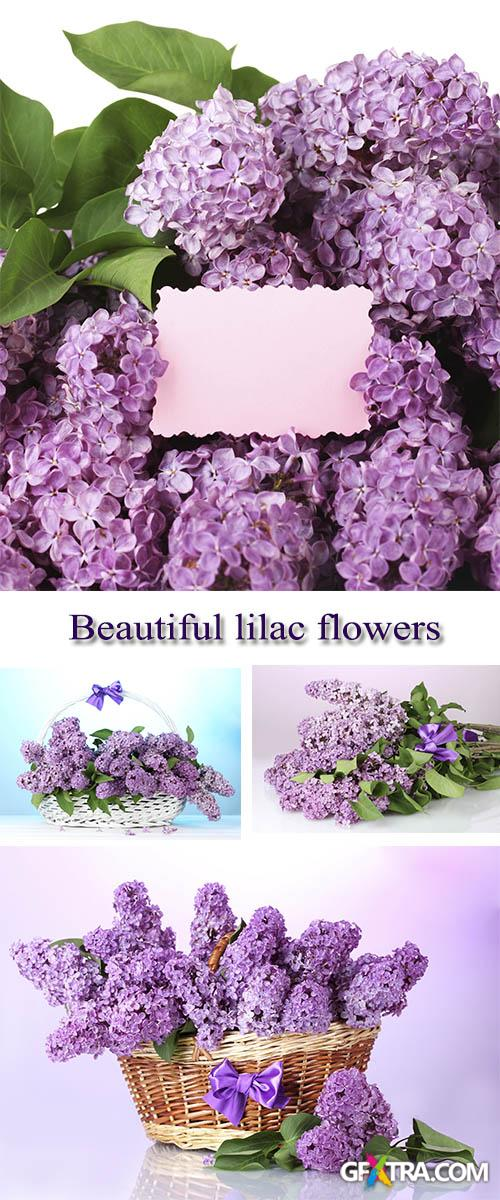 Stock Photo: Beautiful lilac flowers