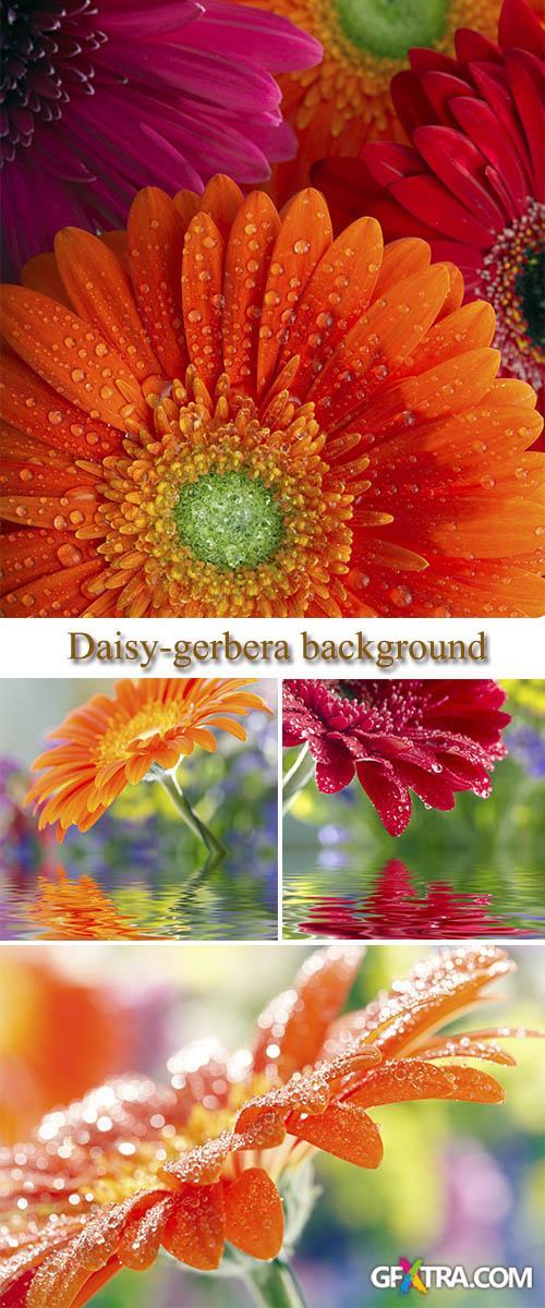Stock Photo: Daisy-gerbera background