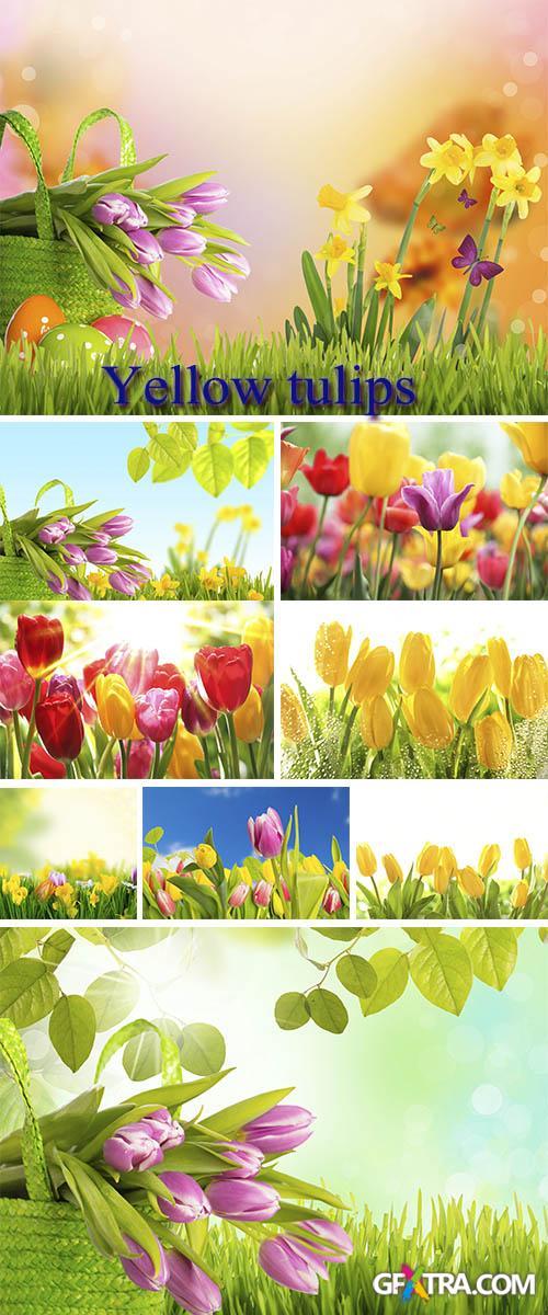 Stock Photo: Yellow tulips 5