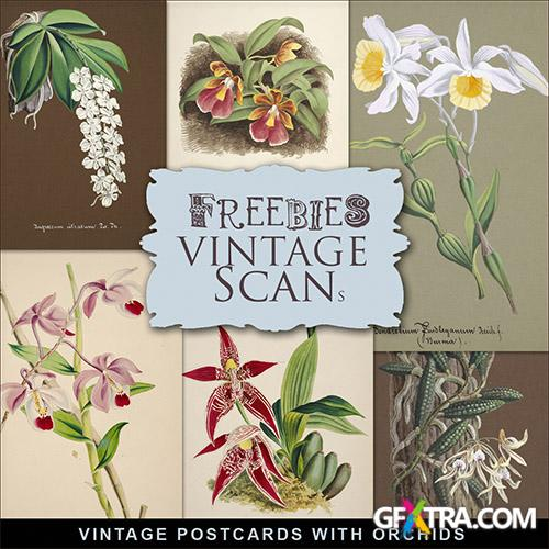 Scrap-kit - Vintage Postcards With Orchids 5