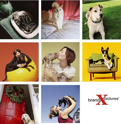 Brand-X X317 Cats and Dogs