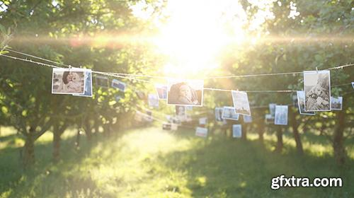 Videohive Photo Gallery in a Sunny Orchard