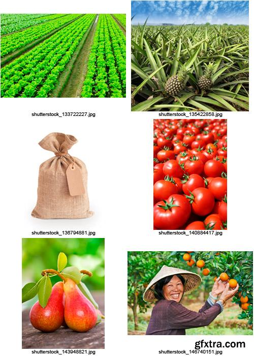 Amazing SS - Agriculture 2, 25xJPGs
