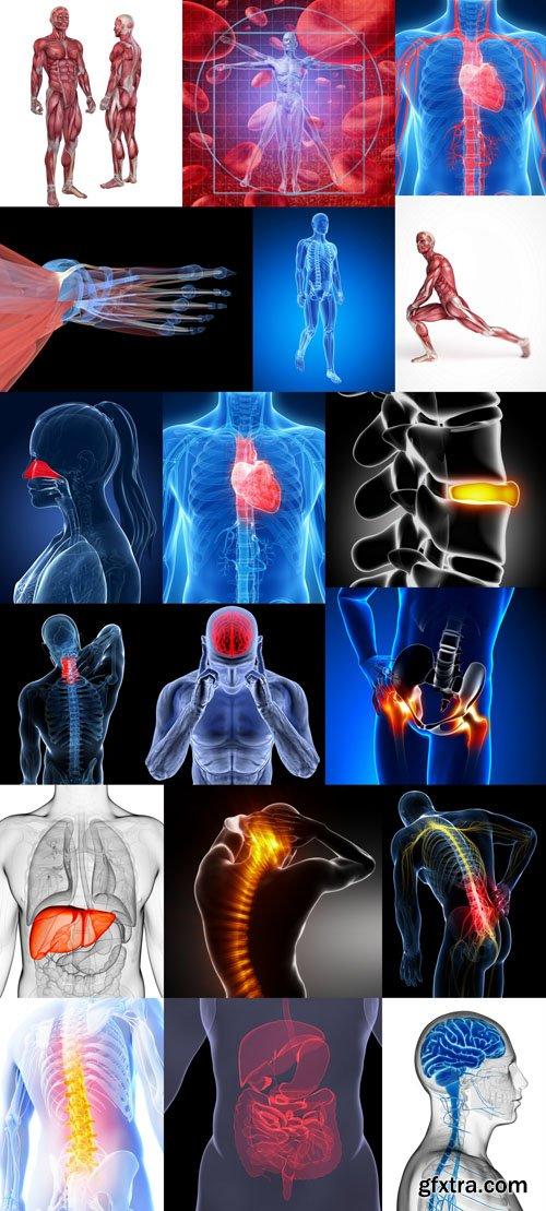 مصممين الدعاية واعلان اطباء هياكل عظمية Structure Human عالية الجودة مباشر,بوابة 2013 1384077033_67.jpg