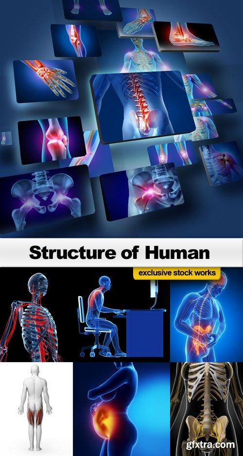 Structure of Human - 25 UHQ JPEG
