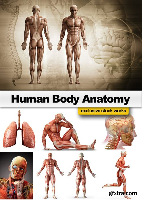 Human Body Anatomy - 25 JPEG