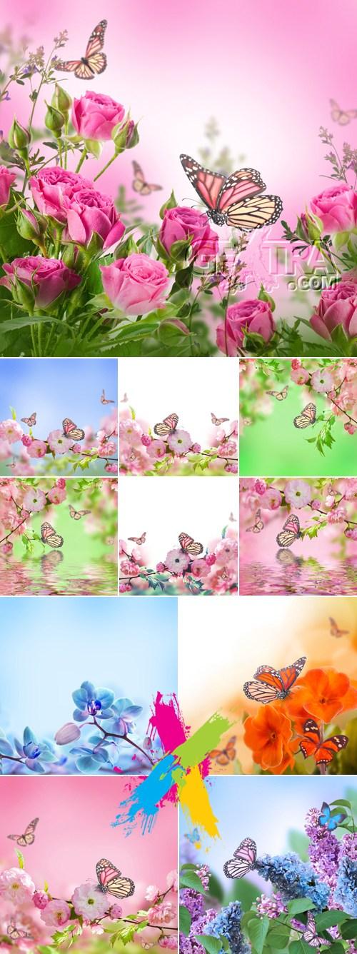 Stock Photo - Beautiful Flowers Backgrounds