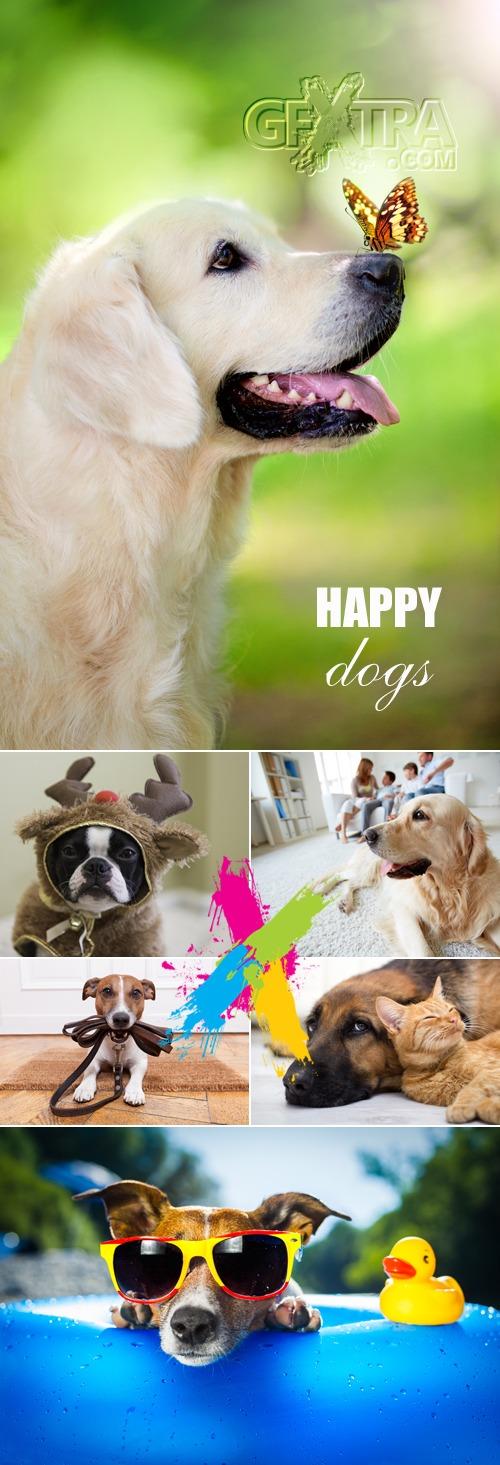 Stock Photo - Happy Funny Dogs