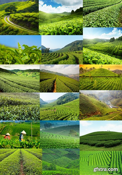 Tea Plantations, 25xUHQ JPEG