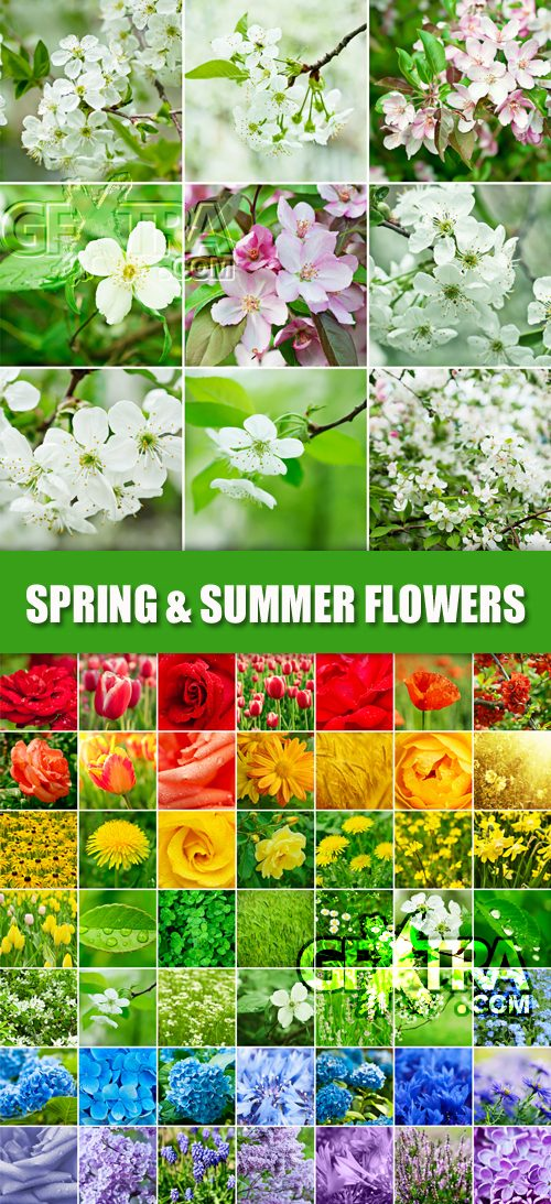 Stock Photo - Spring & Summer Flowers Collage