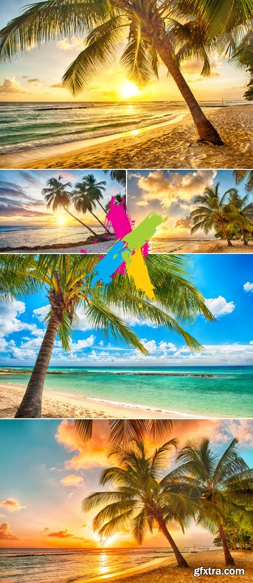 Stock Photo - Tropical Palms & Beach