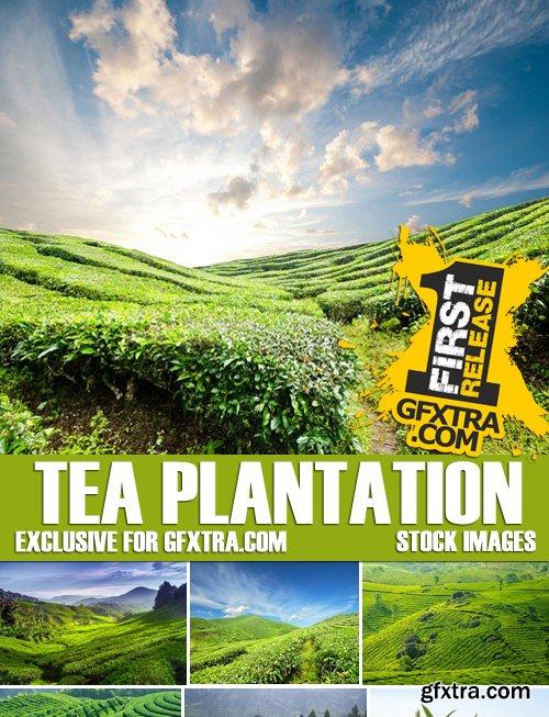Stock Photos - Tea plantation, 25xJPG
