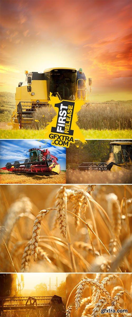 Stock Photo: Harvesting wheat