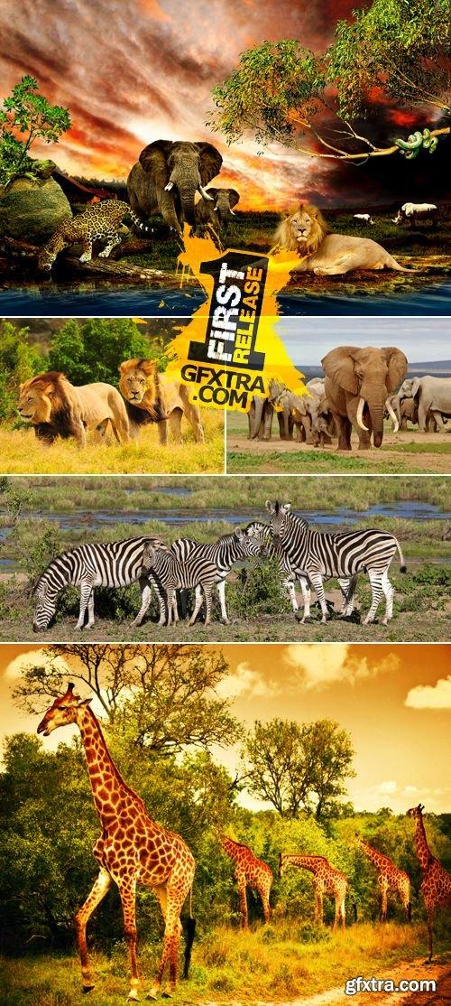 Stock Photo - Wild African Animals