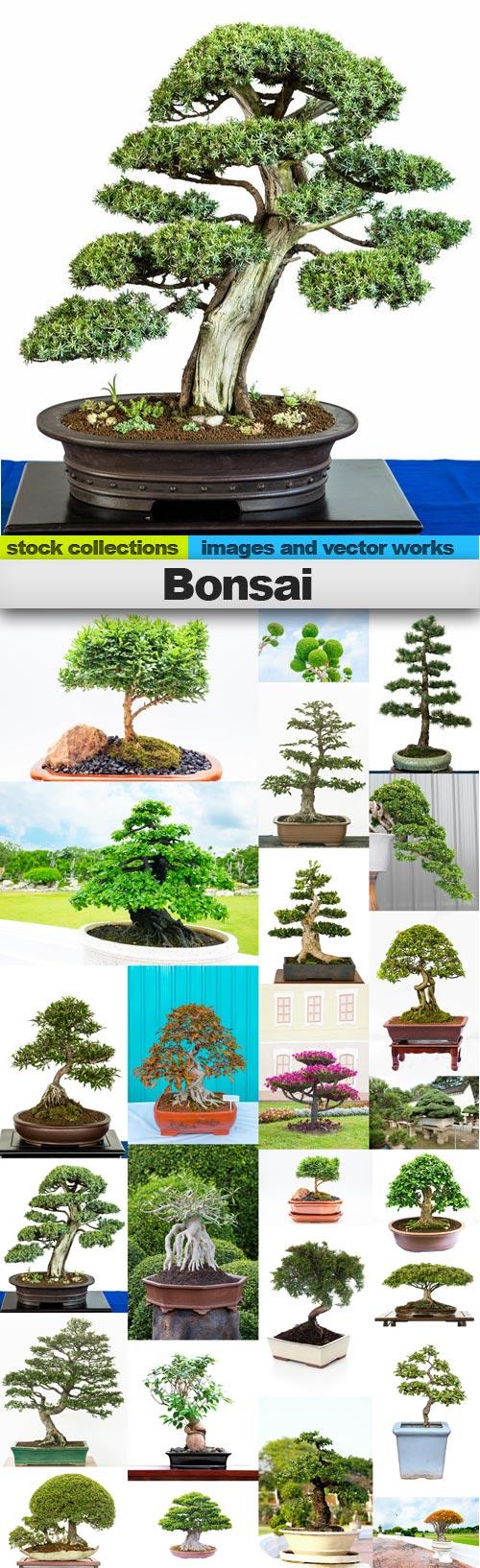 Bonsai,25 x UHQ JPEG