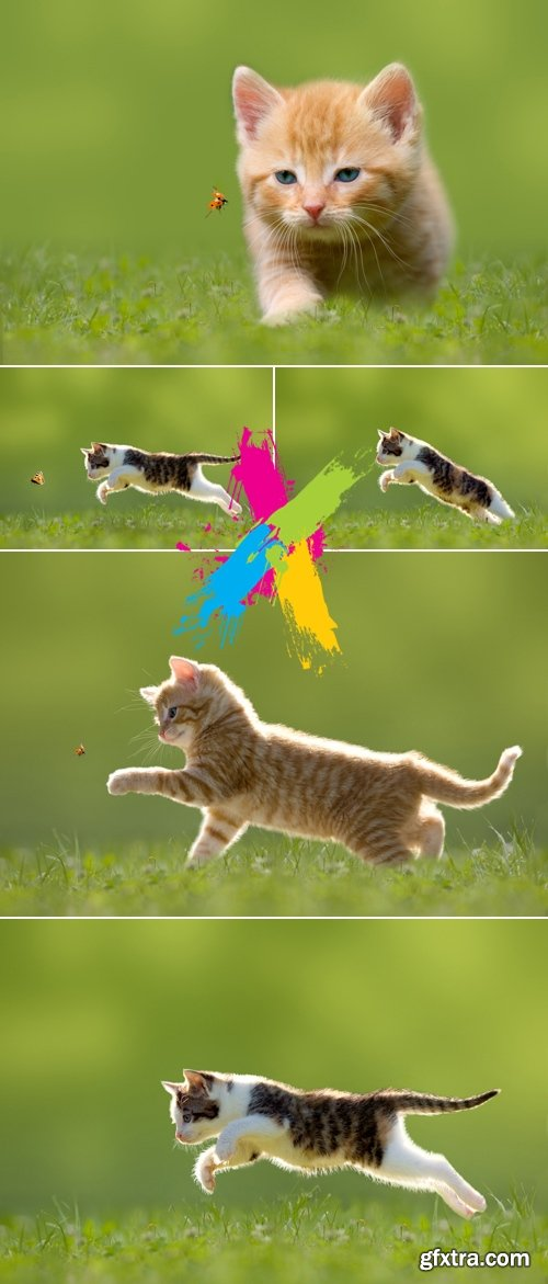 Stock Photo - Funny Cute Cats