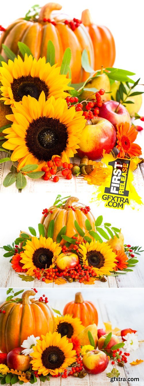 Stock Photo - Autumn Pumkin & Sunflowers